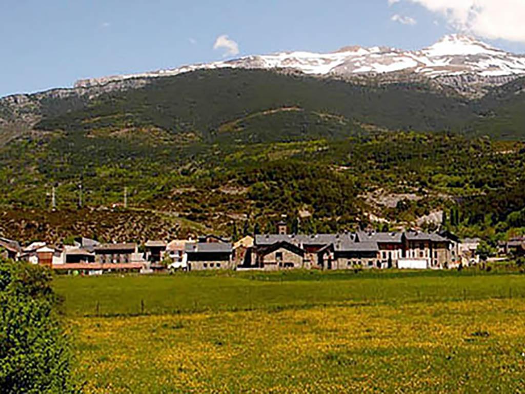Chollo Pirineo Aragonés