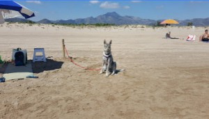 Playa Can Gandia