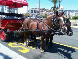Rutas a caballo con carreta por Peñiscola