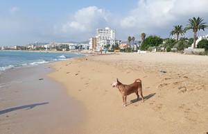 Playa del Barranquet