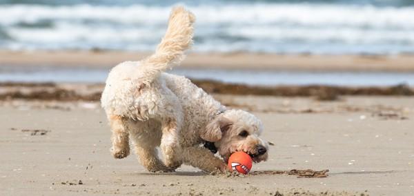 cover-playas-perros-galicia
