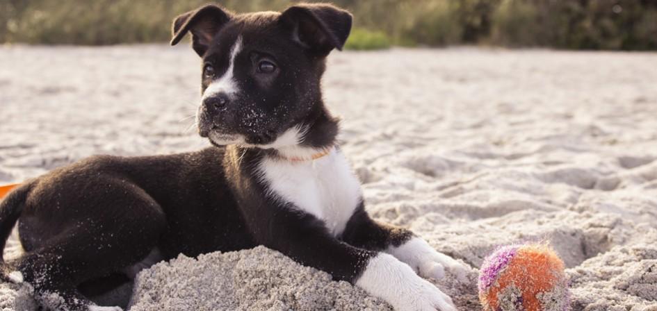 playa-para-perros-andalucia