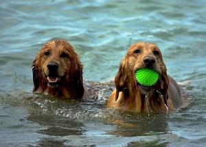 playa-para-perros-en-malaga
