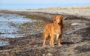 playa-para-perros-en-cadiz