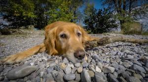 playa-para-perros-en-huelva