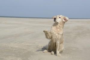 playa-para-perros-en-almeria