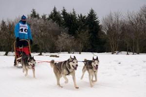 mushing-pirineos-dog-festival