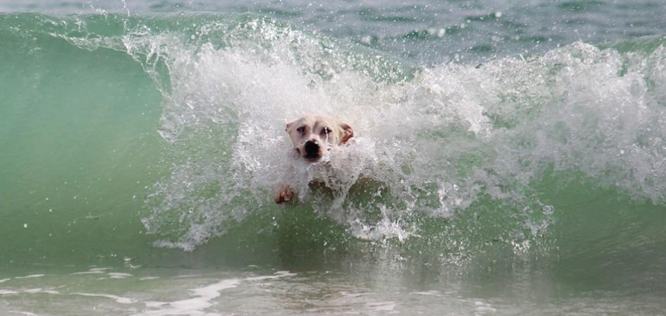playas-para-perros-en-costa-dorada