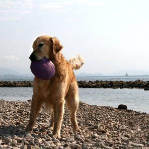 playas-para-perros-punta-del-riu