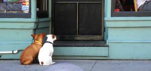 restaurantes perros
