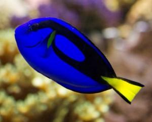 acuario ogrove