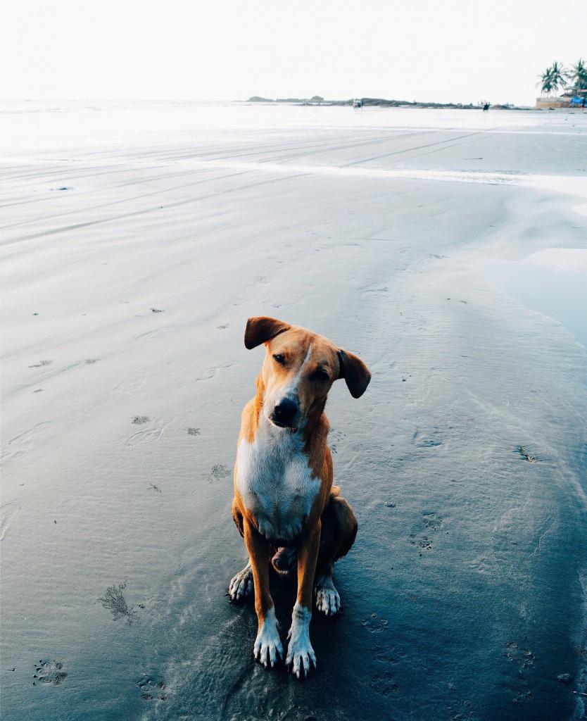 Foto: perro en la playa