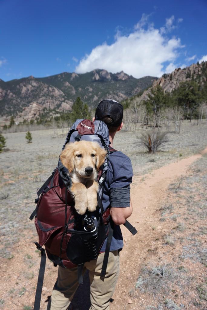 Foto: senderismo con mascotas