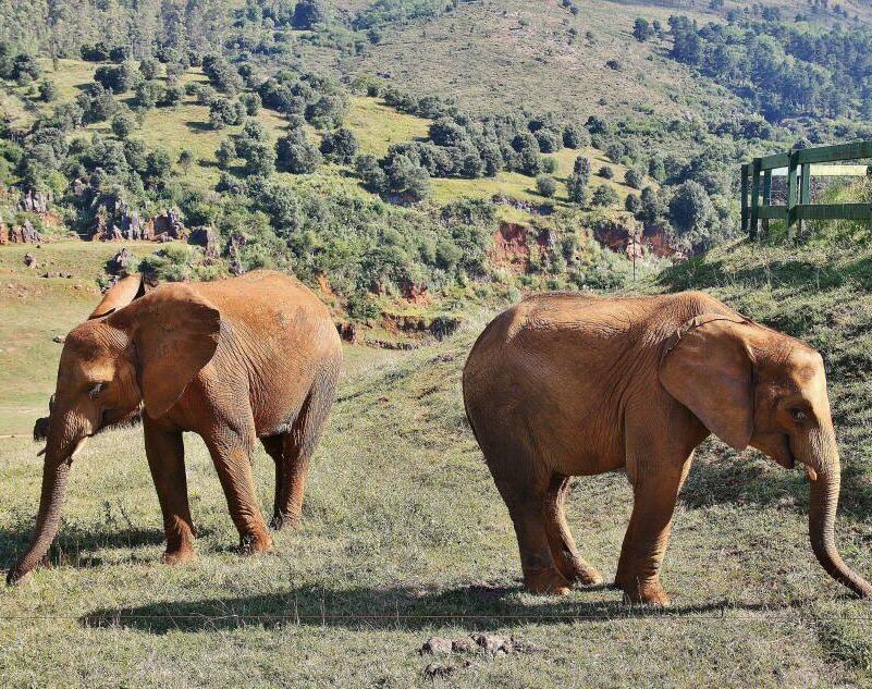 Fotografía de elefantes en el Parque de la Naturaleza de Cabárceno, Cantabria