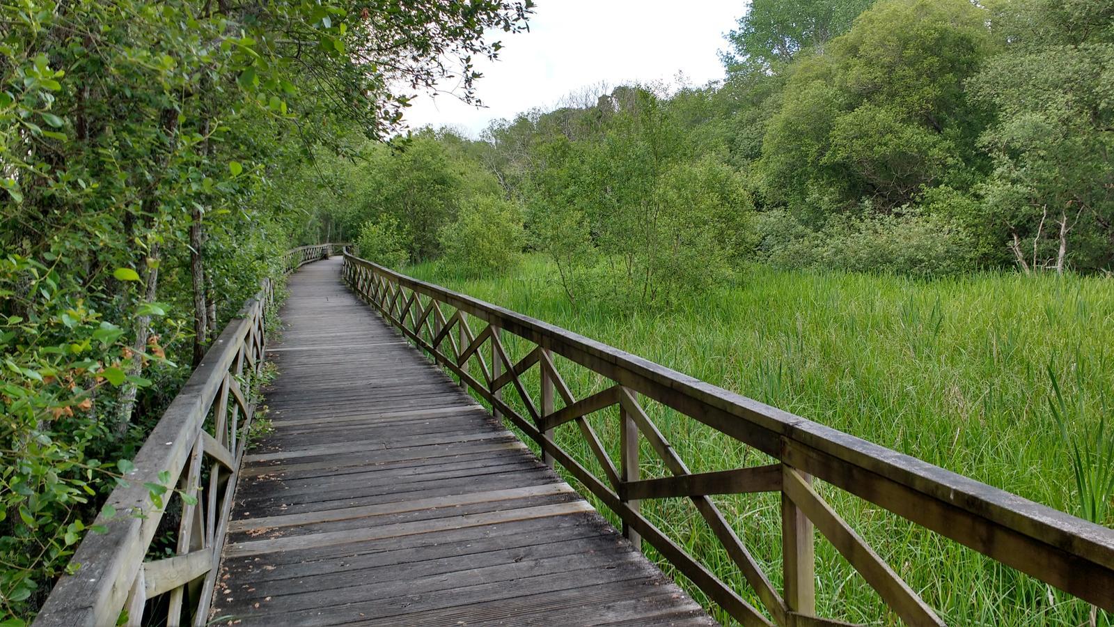 Fotografía de las pasarelas del Humedal da Xunqueira, Ares