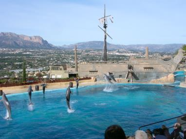 dolphin-show1.jpg