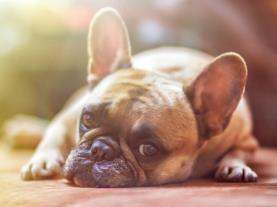 Apartamentos que admiten perros