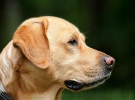 Apartamentos en Marina D Or que admiten perros